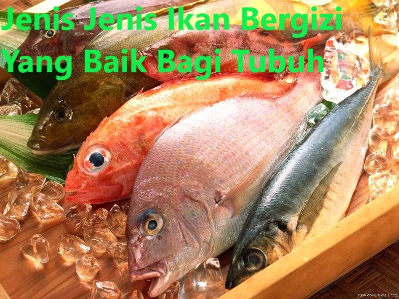 Jenis Jenis Ikan Bergizi Yang Baik Bagi Tubuh